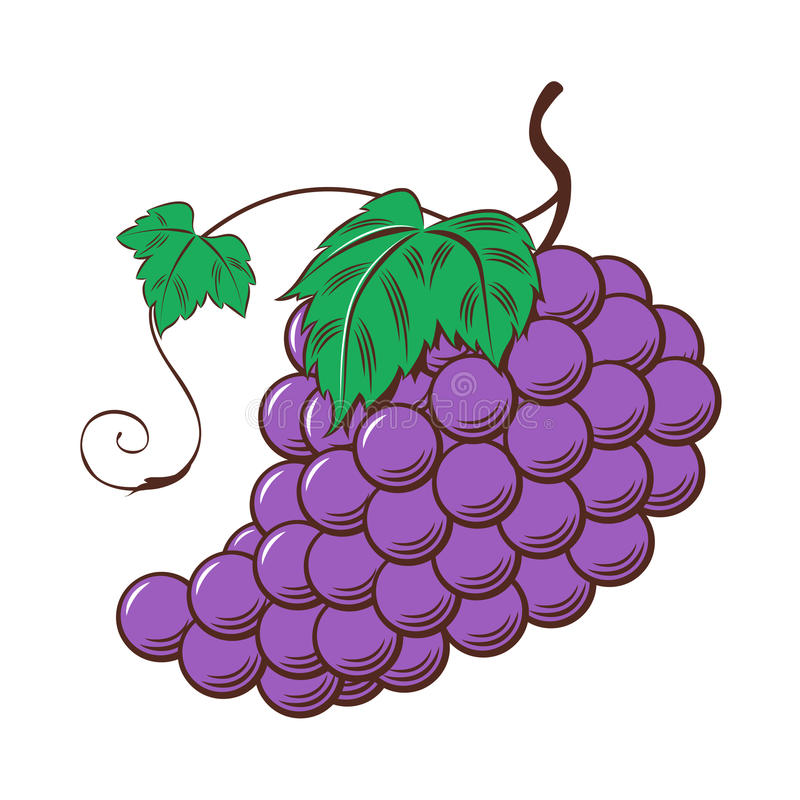 hand draw grape vector stock vector illustration of vector 79344078 rh dreamstime com graph vector graph vector functions