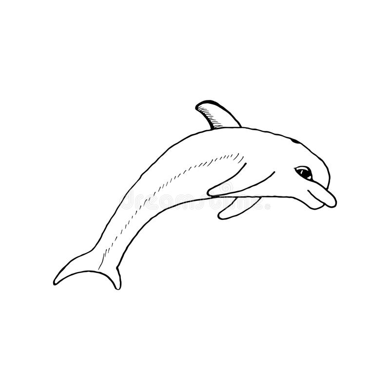 Hand draw a sketch in the style of a dolphin on a royalty free illustration