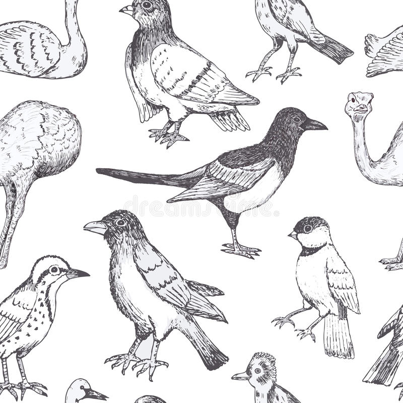 Hand draw vector birds. Seamless pattern vector illustration
