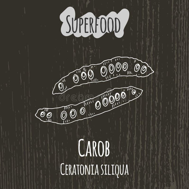 Free Hand Drawing Illustration Of Carob Pods. Ceratonia Royalty Free Stock Photo - 61021935