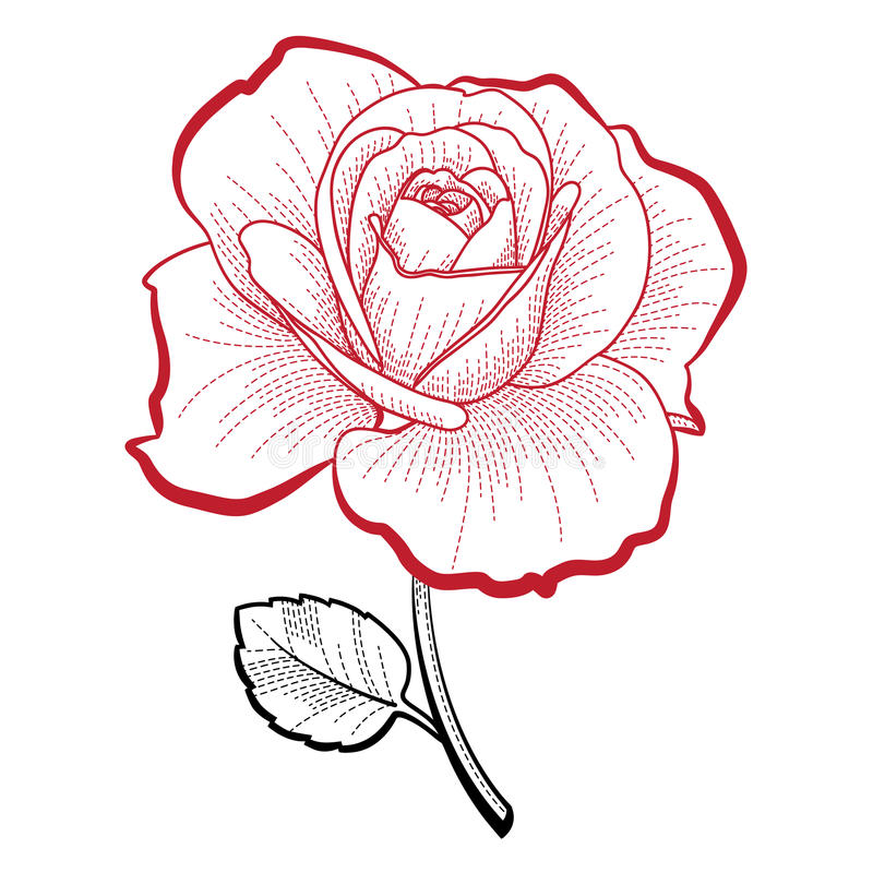 Download Hand drawing rose stock vector. Image of sketch, abstract - 21323924