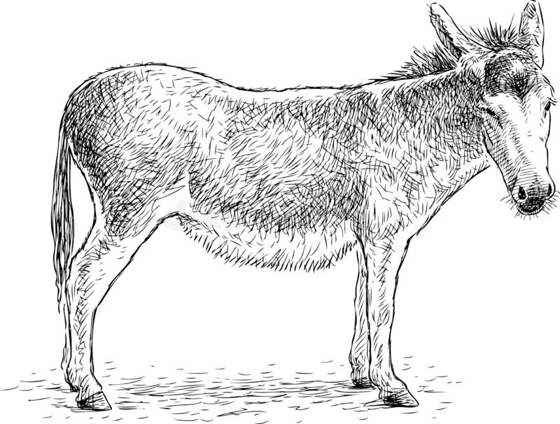 Hand drawing of a sad standing donkey vector illustration