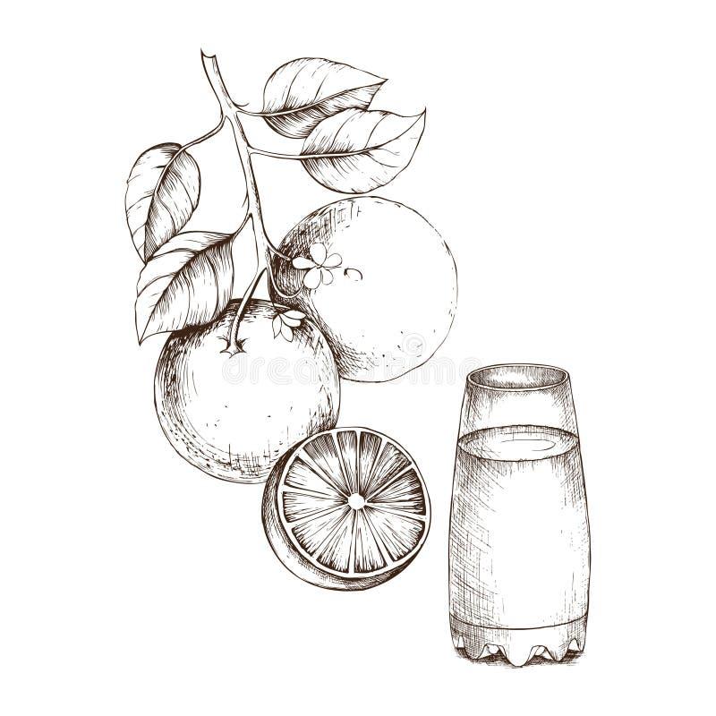 Hand-drawing of sketch orange for design royalty free illustration