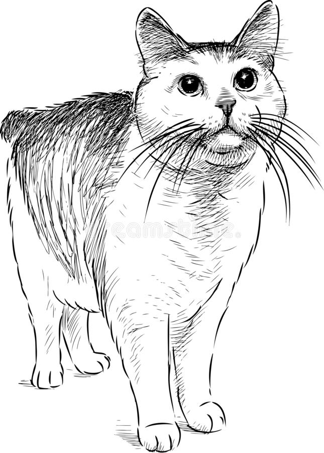 A hand drawing of a watching domestic cat stock illustration