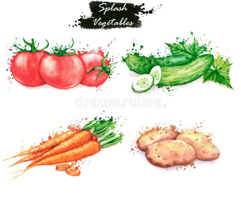 Hand-drawn απεικονίσεις τροφίμων watercolor Απομονωμένα σχέδια των φρέσκων λαχανικών - κόκκινες ντομάτες, αγγούρια, καρότο και πα στοκ εικόνα