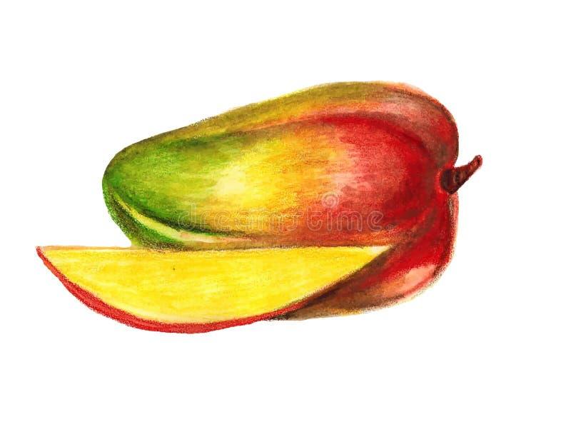 Hand-drawn απεικόνιση φρούτων μάγκο juicy διανυσματική απεικόνιση