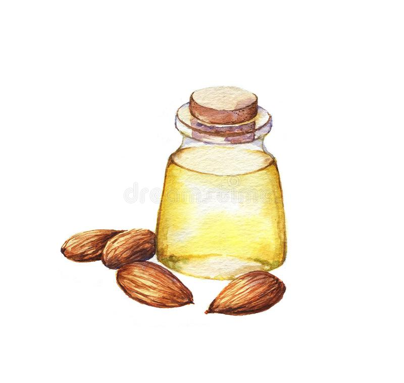 Hand-drawn απεικόνιση watercolor του ελαίου και των καρυδιών αμυγδάλων απεικόνιση αποθεμάτων