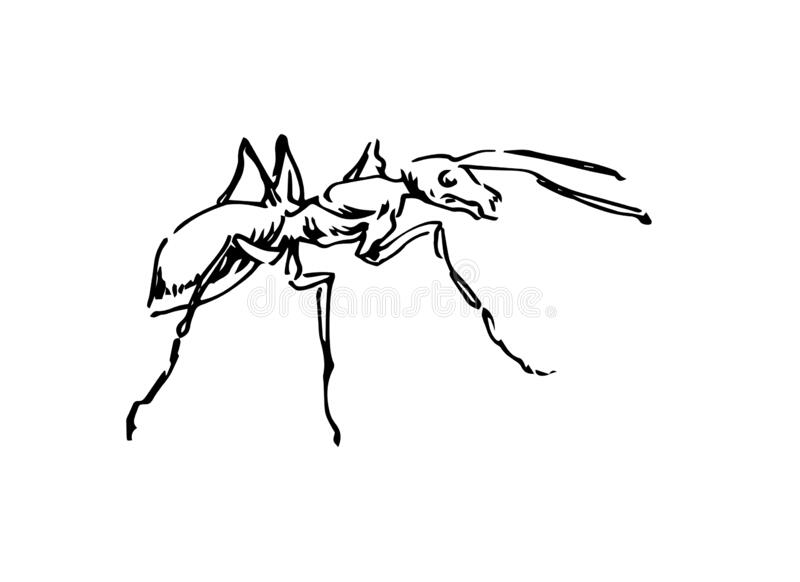 Black And White Vector Outline Of An Ant White Background Stock Vector Illustration Of Marching Work 181241396