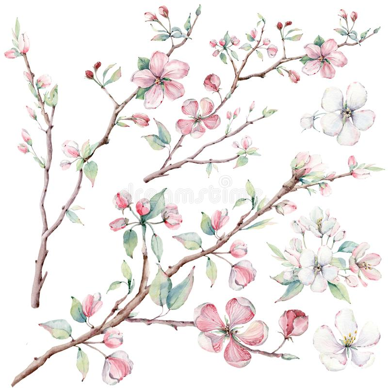 Free Hand Drawn Apple Tree Branches And Flowers, Blooming Tree. Royalty Free Stock Photography - 100377157
