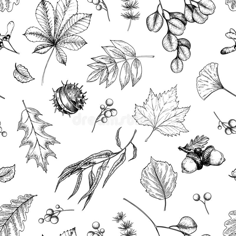 Hand drawn autumn leaf. Vector seamless pattern of tree leaves. Fall forest folliage. Maple, oak, chestnut, birch, acorn vector illustration