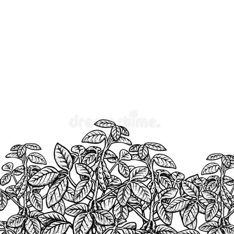 Hand drawn background with soy plant. Vector illustration. Hand drawn background with soy plant. Retro sketches. Vintage design. Black and white plant. Vector stock illustration