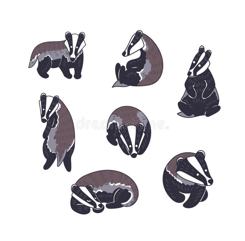 Hand drawn Badger vector illustration stock illustration