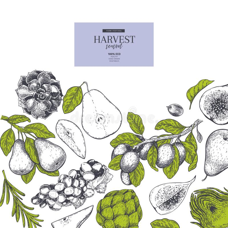 Hand drawn banner with autumn harvest fruits and vegetables. Vector vintage engraved style. Pear, artichoke, grape, plum stock illustration