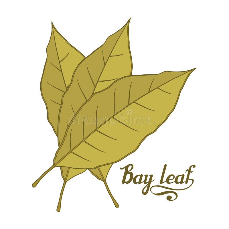 Hand drawn bay leaf, spicy ingredient, bay leaf logo, healthy organic food, spice bay leaf isolated on white background, culinary. Herbs, label, food, natural royalty free illustration