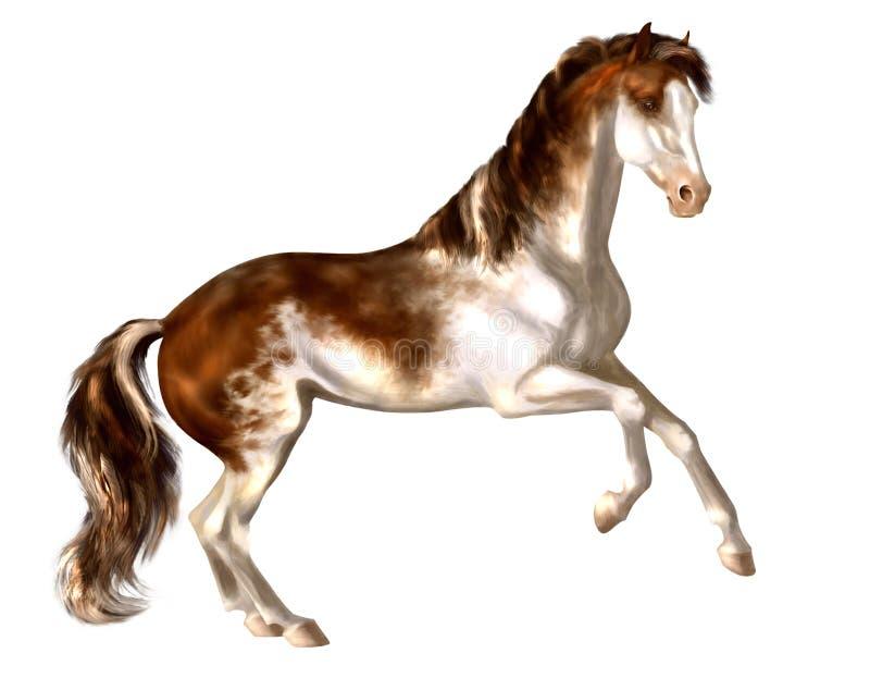 Hand-drawn Bay Sabino Stallion Stock Photo