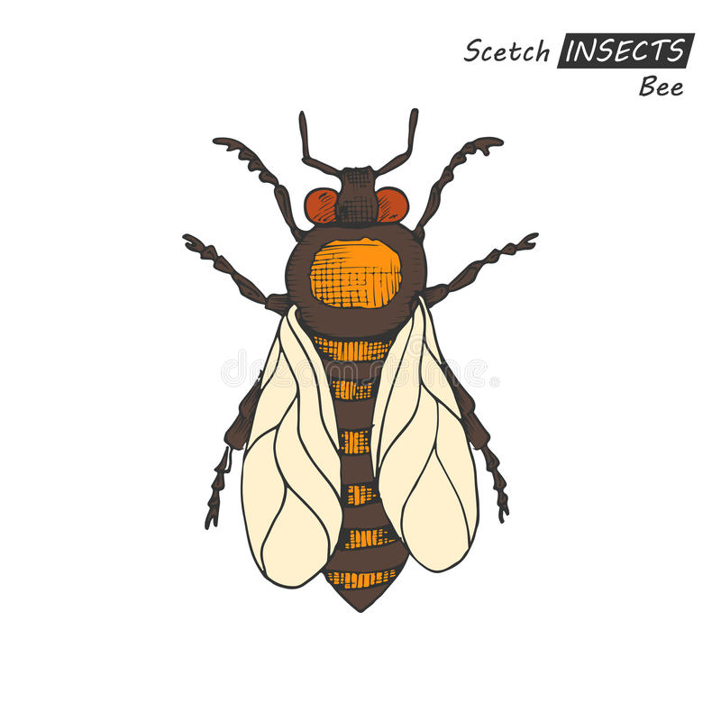 Hand drawn bee royalty free illustration