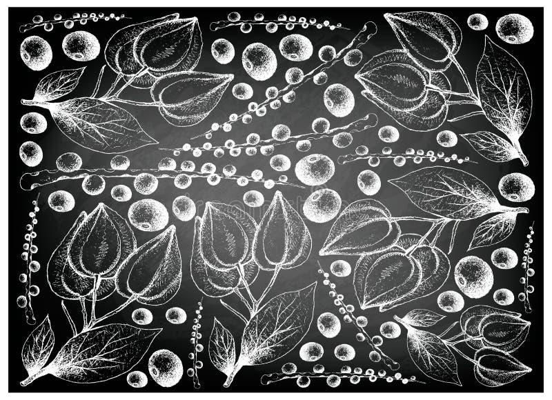 hand drawn belimbing merah acai berries chalkboard berry fruit illustration wallpaper background sketch euterpe 114475993