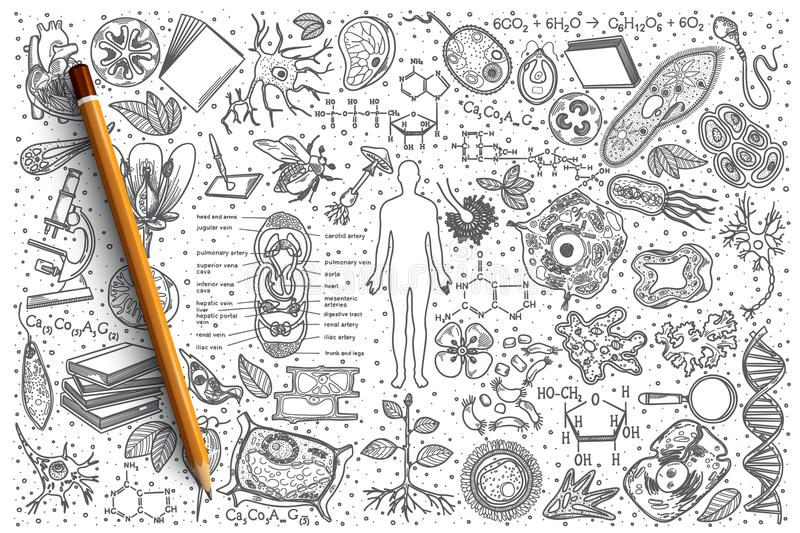 Hand drawn Biology vector doodle set royalty free stock photo
