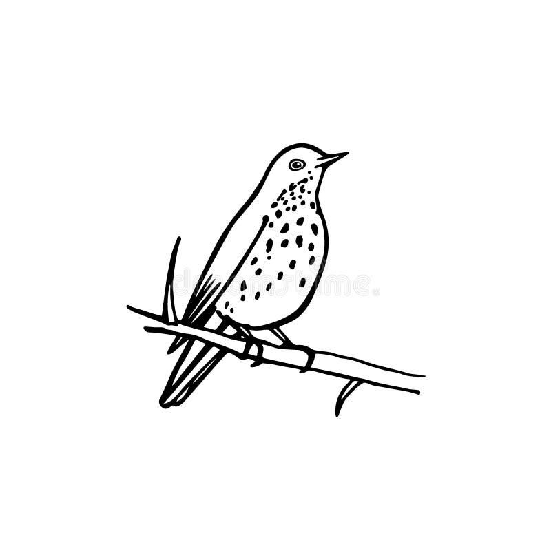 Download Hand Drawn Bird Stock Vector Illustration Of Species