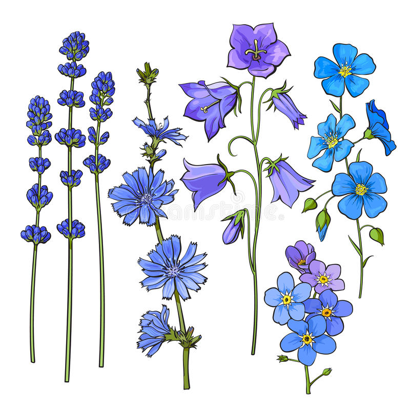 Hand drawn blue flowers - lavender, forget me not, bell, cornflowers stock illustration