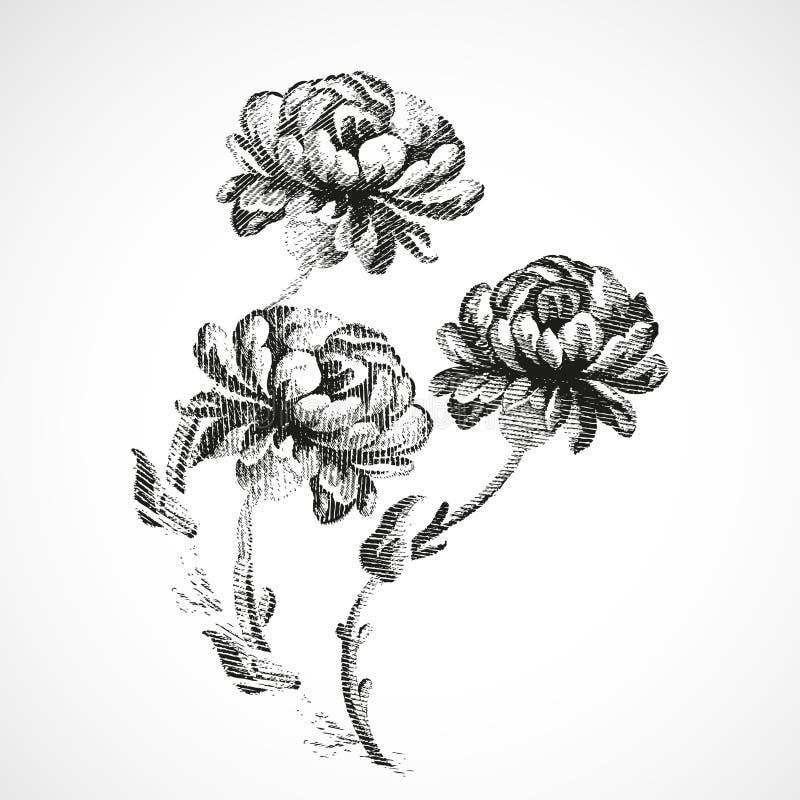 Hand-drawn boeket van drie bloemen van pioenen uitstekende achtergrond royalty-vrije illustratie
