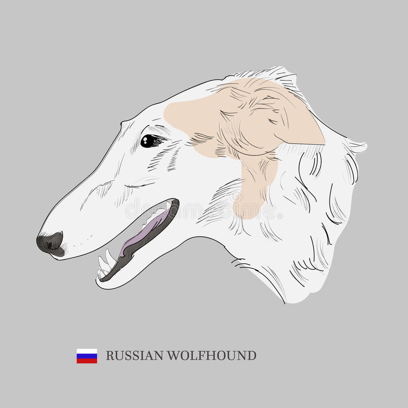 Hand drawn borzoi illustration. Russian wolfhound dog portrait illustration stock illustration