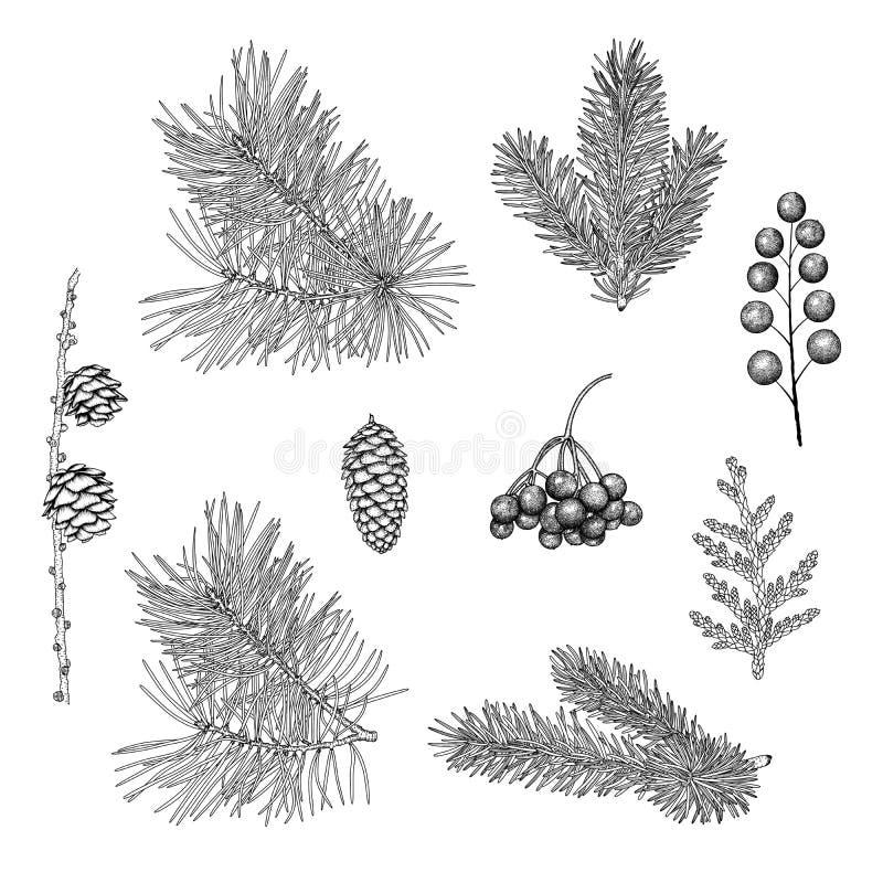 Hand-drawn Christmas plants. stock image