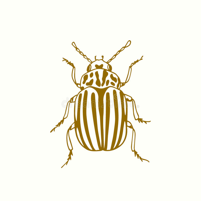 Download Hand drawn bug stock vector. Image of beetle, beautiful - 83703858