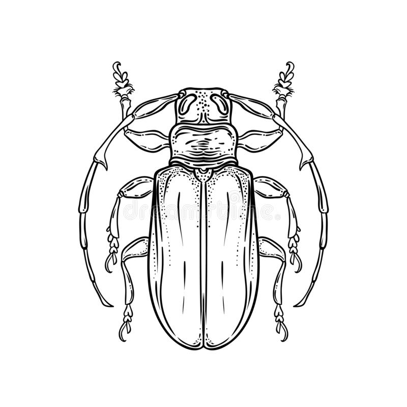 Hand drawn bug in vintage style. Beetles vector illustration iso stock illustration