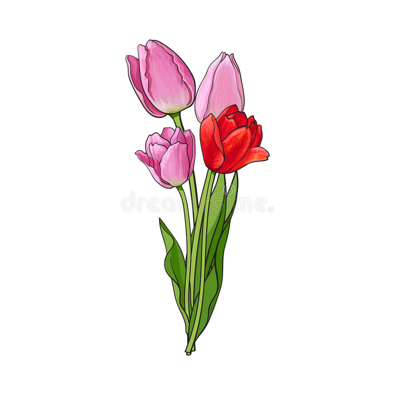 Hand drawn bunch of three side view pink tulip flower stock illustration