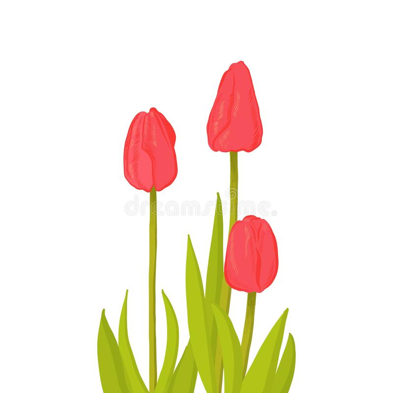 Hand drawn bunch of three side view red tulip flower, sketch style vector illustration isolated on white background. Realistic vector illustration
