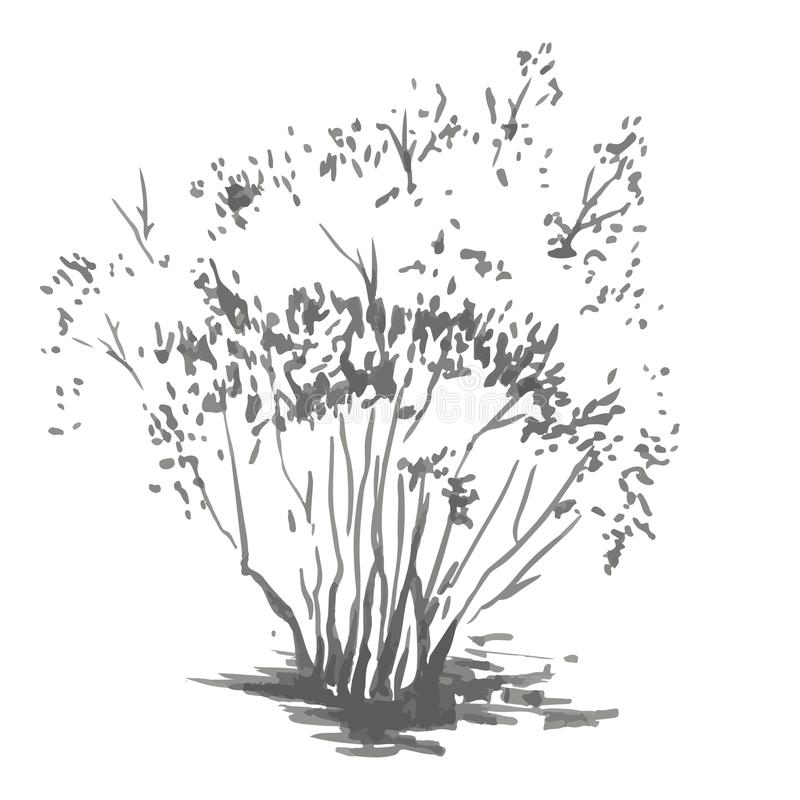 Free Hand-drawn Bush. Rrealistic Image In Shades Of Gray, Sketch Painted With Ink Brush Royalty Free Stock Photo - 99804915