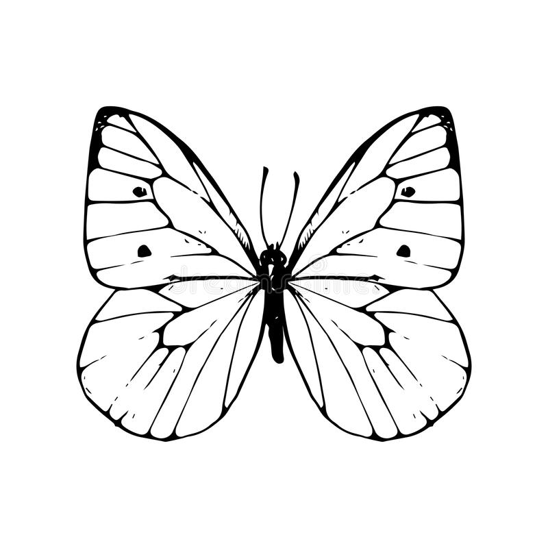 Butterfly Line Drawing Easy : Hand drawn butterfly stock vector illustration of line