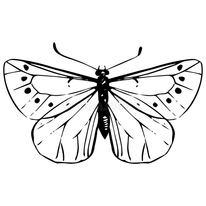 Contour Line Drawing Butterfly : Hand drawn butterfly stock vector illustration of spring
