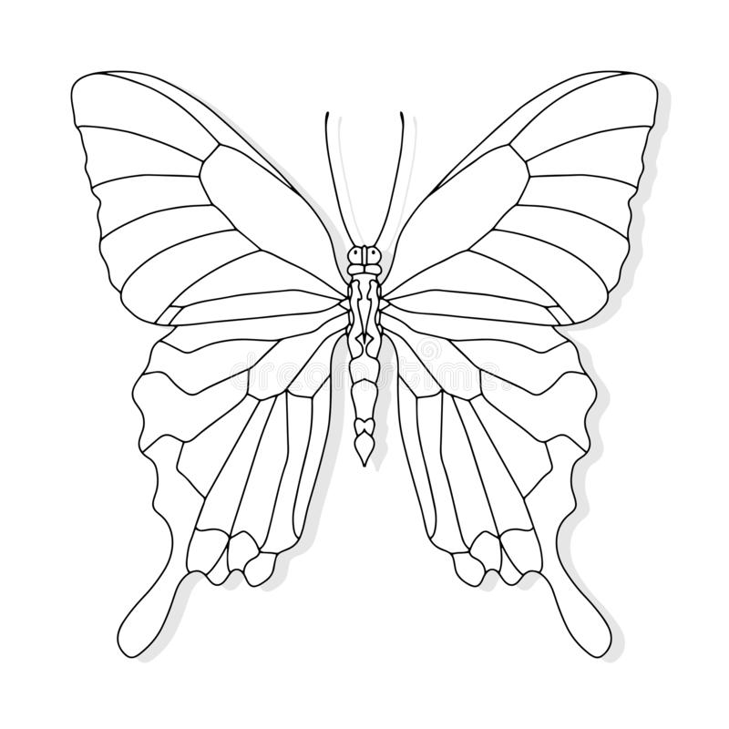 Hand drawn butterfly for t-shirt design or tattoo. Coloring book for kids and adults. Vector illustration royalty free illustration
