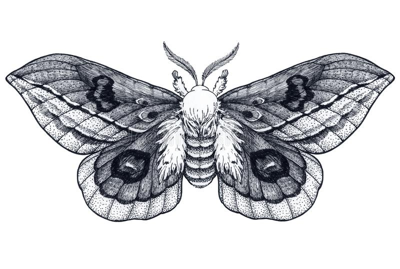 Hand drawn butterfly tattoo. Dotwork tattoo. Beautiful moth. Automeris Randa. Mystical symbol of freedom, beauty, life,. Perfection. Black and white tattoo vector illustration