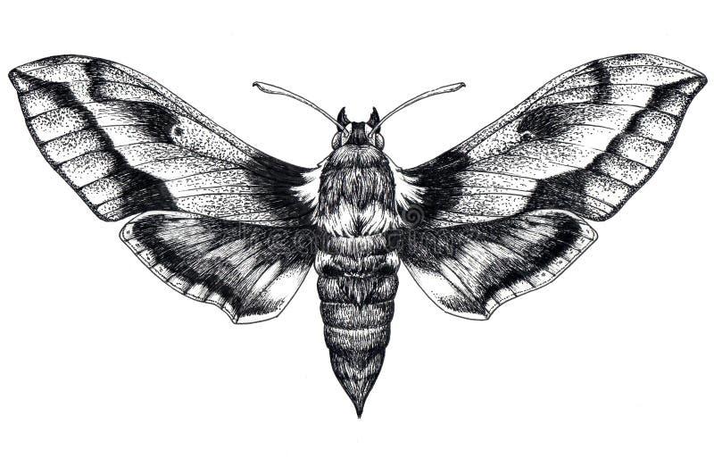 Hand drawn butterfly tattoo. Dotwork tattoo. Hummingbird hawk moth. Macroglossum stellatarum. Lepidoptera. vector illustration