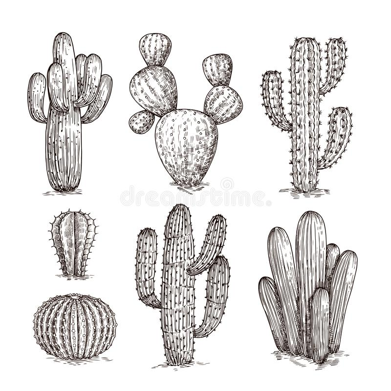 Free Hand Drawn Cactus. Western Desert Cacti Mexican Plants In Sketch Style. Cactuses Doodle Vector Set Royalty Free Stock Photography - 138428687