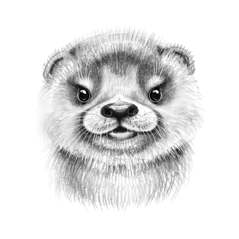 Free Hand Drawn Cartoon River Otter Cub Royalty Free Stock Photography - 162065117