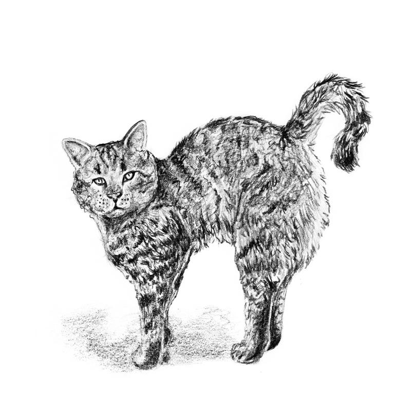 Hand drawn cat with pencils stock illustration