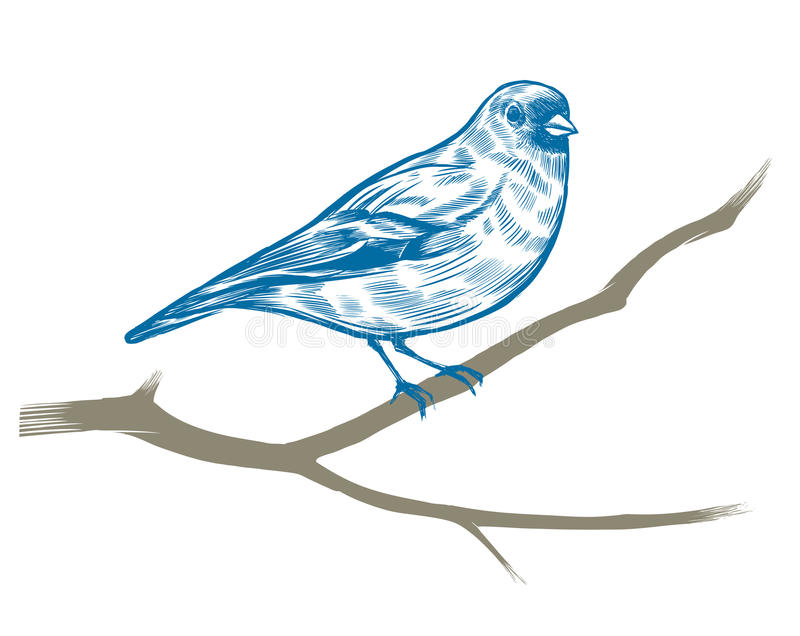 Hand Drawn Chaffinch Stock Photography