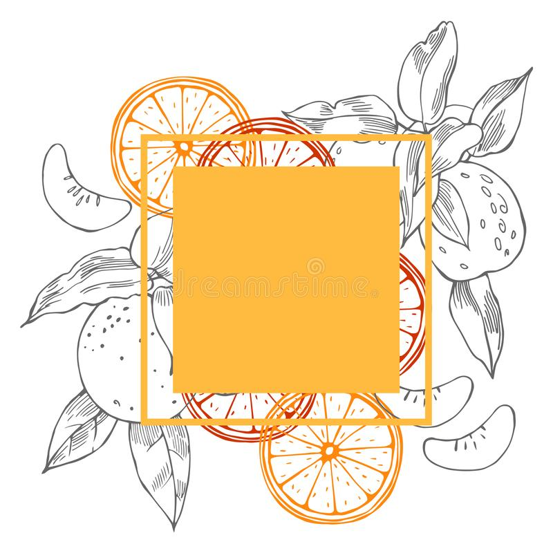 Hand drawn citrus fruits. Vector frame. Hand drawn citrus fruits on white background. Vector frame vector illustration