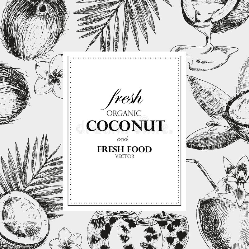 Hand drawn coconut design template. Retro sketch style vector tropical food illustration. stock illustration