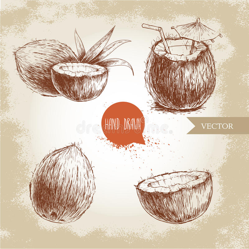 Hand drawn coconut set. Cocktail on vintage background. Retro sketch style vector tropical food illustration royalty free illustration