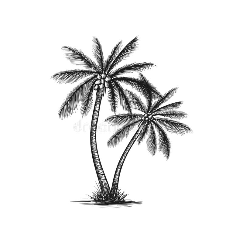 Free Hand Drawn Coconut Tree Vector Stock Photography - 131879882