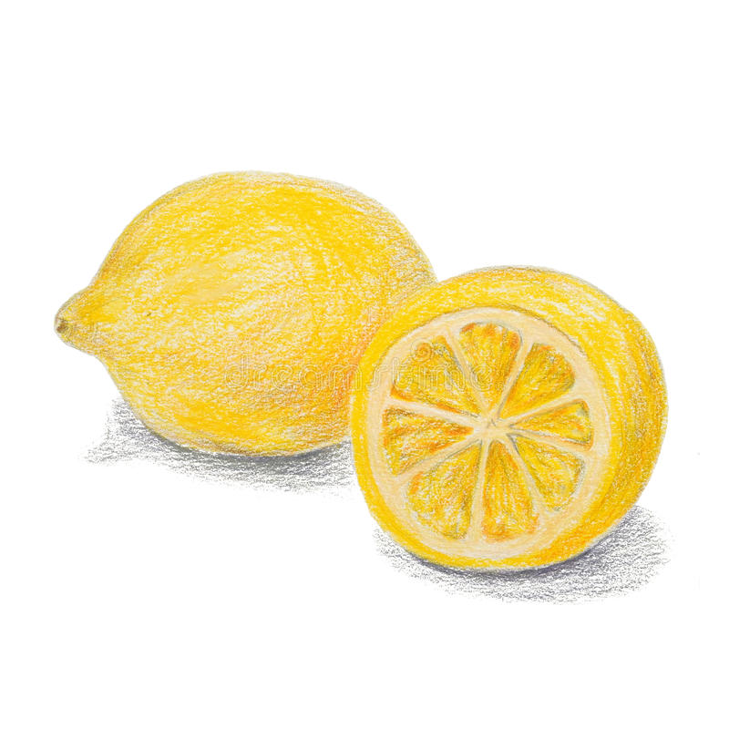Free Hand Drawn Colored Pencils Lemon Sketch With Shadow Stock Image - 55181741