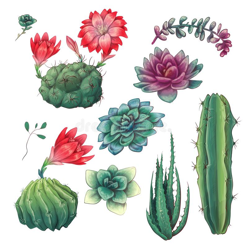 Hand drawn colorful cactuses and succulent set. Houseplant, cactus, tropical plants. vector illustration
