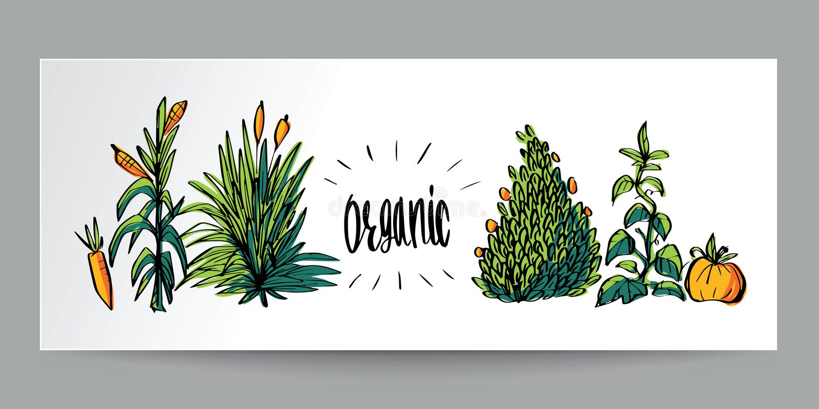 Hand drawn colorful doodle style Organic natural, bio, ecology a stock illustration