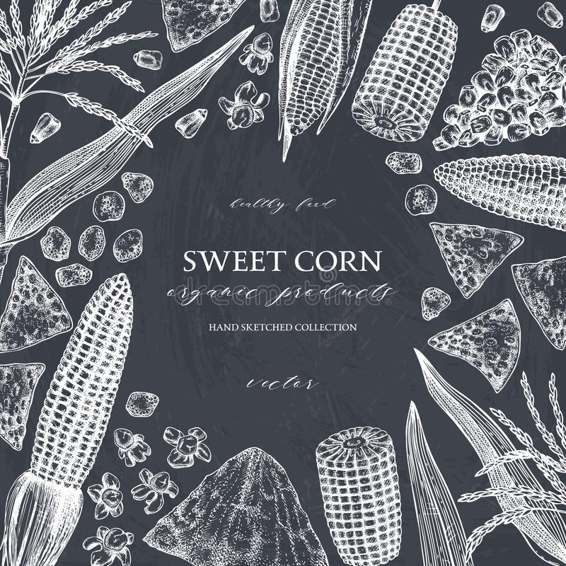 Hand drawn corn design on chalkboard. Vector food sketches. With Maize plant, corn cob and grains. Botanical drawing of vintage royalty free illustration