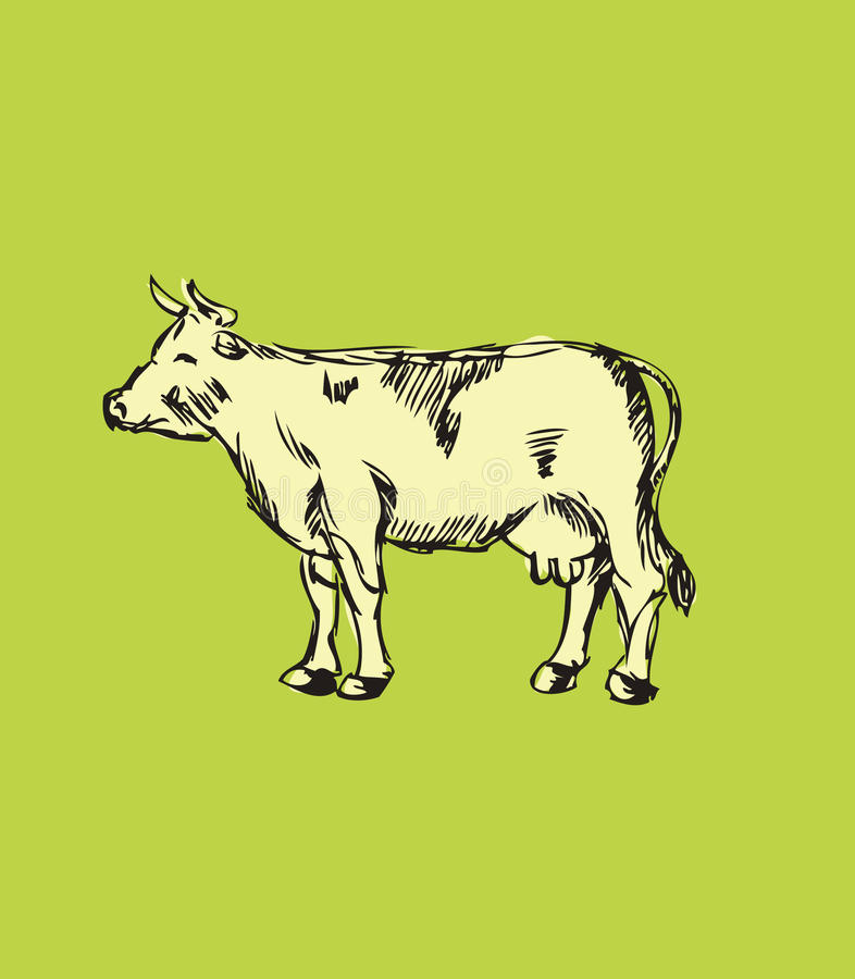 Hand Drawn Cow Stock Photos